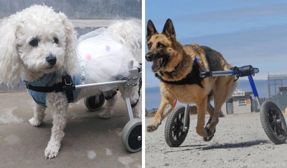 silla de rueda para perros