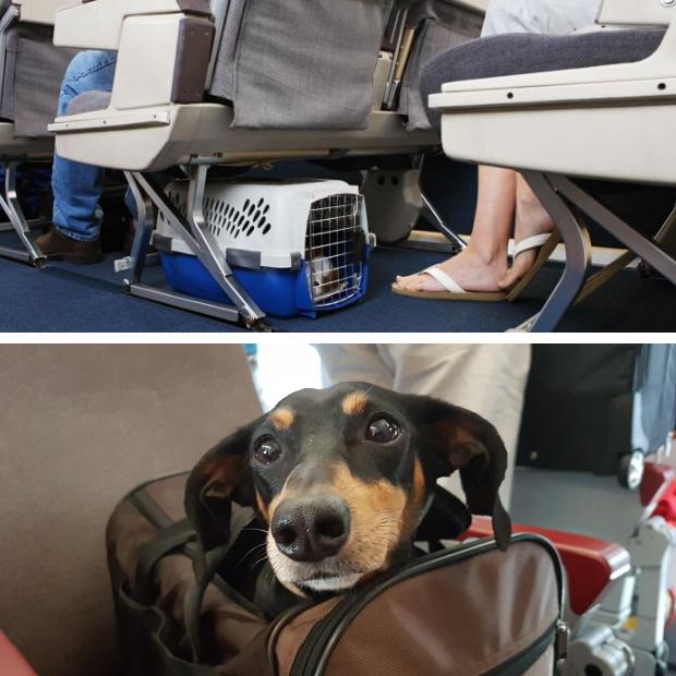 transportin perro avion